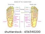 vector illustration of a human... | Shutterstock .eps vector #656540200