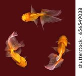 goldfish isolated on red... | Shutterstock . vector #656549038