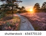 Path Trough Heathland With...