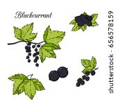 berries  branches and leaf of...   Shutterstock .eps vector #656578159