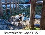 Two Cute Little Kittens Playin...