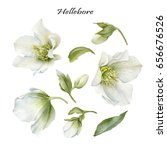 Stock photo flowers set of watercolor hellebore and leaves 656676526
