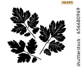 vector icon of parsley. the... | Shutterstock .eps vector #656680969