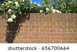 English White Rambling Rose...