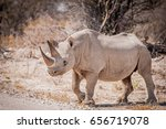black rhino crossing the road ... | Shutterstock . vector #656719078