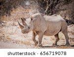 Black Rhino Crossing The Road ...