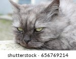 Small photo of angry cat