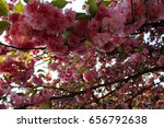 Small photo of Flowering tree