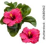 Beautiful Tropical Pink...