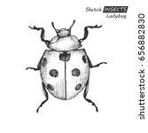 hand drawn ink sketch of... | Shutterstock .eps vector #656882830