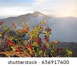 folwer at mount bromo volcano ... | Shutterstock . vector #656917600