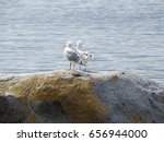 Pair Of Seagulls   Vancouver  ...
