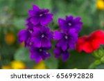 Tiny Violet Dark Purple Flower...