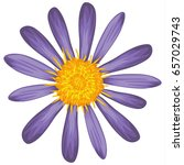 Vector Illustration Of Aster...