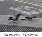 Three Pigeons Eating Bread