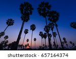 silhouette of palm trees during ... | Shutterstock . vector #657164374