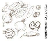 hand drawn sketch style beet on ... | Shutterstock .eps vector #657170263