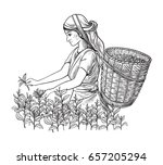 a woman in traditional clothes... | Shutterstock .eps vector #657205294