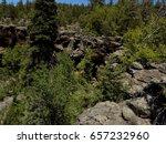 Arizona Pine Forest And...