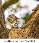 Stock photo cute cat is lying on the tree little kitten on a branch cute pets have three colors on a natural 657263344