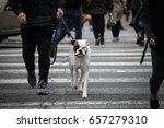 Stock photo dog crossed the crosswalk 657279310
