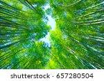 Fresh Green Bamboo Grove