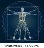 Body and skeleton in vitruvian man - this is a 3d render illustration - stock photo