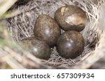 Small photo of Eurasian skylark (Alauda arvensis) nest