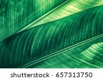 tropical foliage  stripes of... | Shutterstock . vector #657313750