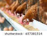 hen  chicken eggs and chickens... | Shutterstock . vector #657381514