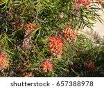 Bright Orange Red  Flower Spik...