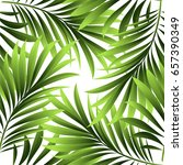 leaves of a tropical palm tree. ... | Shutterstock .eps vector #657390349