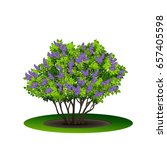 lilac bush with green leaves... | Shutterstock .eps vector #657405598