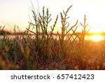 summer field with wild flowers | Shutterstock . vector #657412423