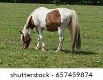 Horses For Grazing
