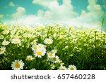 daisies wildflowers | Shutterstock . vector #657460228