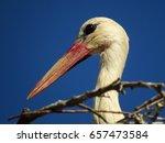 white stork  ciconia ciconia  | Shutterstock . vector #657473584