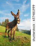 Picture of a funny donkey at...
