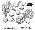 radish hand drawn illustration... | Shutterstock . vector #657518296