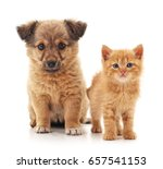Stock photo puppy and kitten isolated on a white background 657541153
