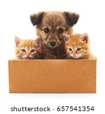 Stock photo puppy and two kittens in a box isolated on white background 657541354