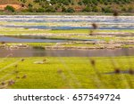 Small photo of Protected Natura area in Lake Prokopou near Achaia, Greece. Prokopou Lake is one of the many protected natura areas in Greece where the visitor can see protected bird species from close distance