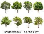 isolated tree on white... | Shutterstock . vector #657551494