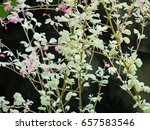 ornamental plants | Shutterstock . vector #657583546