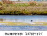 Small photo of Birds resting in protected Natura area in Lake Kotichi in Ilia prefecture, Greece, one of the many protected natura areas, where the visitor can see protected bird species from close distance