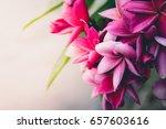 tropical flowers frangipani ... | Shutterstock . vector #657603616