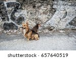 Two Dogs Watching Into The...