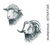 horned ram and lamb.set of... | Shutterstock .eps vector #657657160