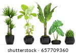 3d digital render of plant... | Shutterstock . vector #657709360