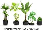 3d digital render of plant... | Shutterstock . vector #657709360
